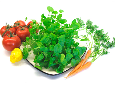 watercress-benefits